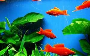 热带鱼为什么总是生病?